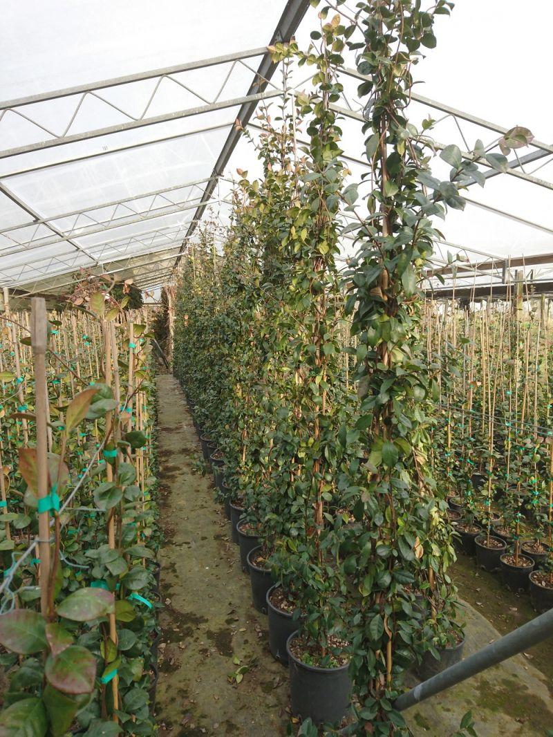 Piante da giardino pistoia pescia vendita piante da giardino online vivai piante da giardino - Prezzi piante da giardino on line ...